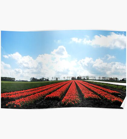 It is tulip time again in Holland Poster