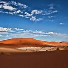 Dune Scape by Jill Fisher