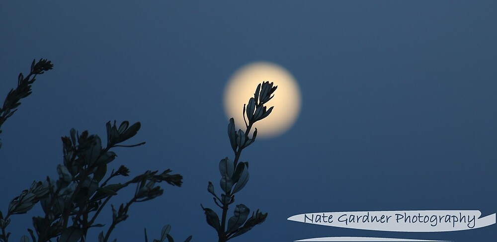 Moon Flower by Nathan Gardner