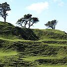 Hill, Trees and Shadows by John Sharp