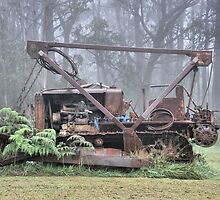 Bull Dozer Dozing!! Mt Wilson NSW Australia by Bev Woodman