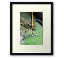 Tough love. Framed Print