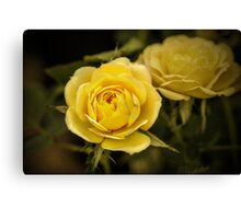 Yellow Roses - textured Canvas Print