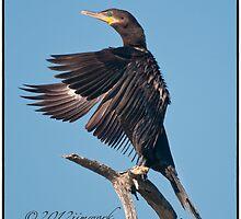 Neotropic Cormorant Yoga by JimWork