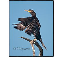 Neotropic Cormorant Yoga Photographic Print
