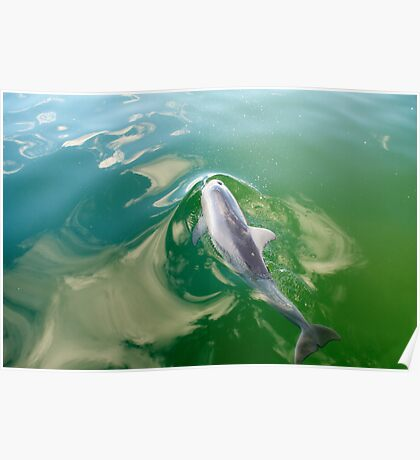 Dolphin surfing Poster