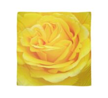 Beautiful Yellow Rose Closeup  Scarf