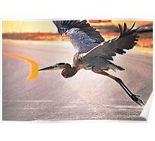 Blue Heron Takes Flight Poster