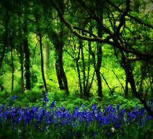 Bluebell Woods by emajgen