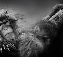 Snow Monkey by hangingpixels