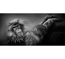 Snow Monkey Photographic Print