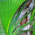 Palm Frond by joevoz