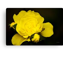 Colorful Yellow Rose Flower Art Canvas Print