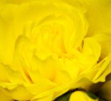 Colorful Yellow Rose Flower Art Sticker