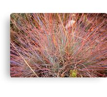 In this case, pink predominates Canvas Print