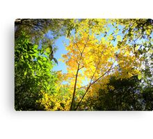The yellow says it all Canvas Print