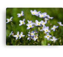 Country Wildflowers Canvas Print