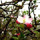 Spring has Sprung by SanjayKalyan