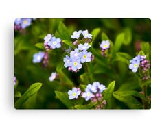 Forget Me Nots Colorful Flower Art Canvas Print