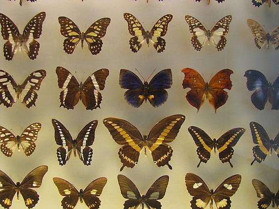Butterfly by Sanne Thijs