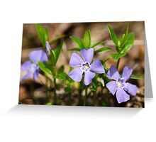 Purple Pinwheels Flower Art Greeting Card