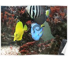 I Don't Like Single-Coloured Fishes... - No Quiero Pezes Unicolores Poster