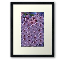 Pretty Pink Cherry Blossoms Framed Print