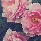 Pink Peonies by Kameron Walsh