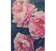 Pink Peonies Photographic Print