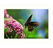 Colorful Spicebush Swallowtail Butterfly Art Art Print