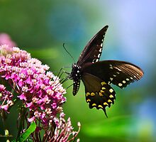 Colorful Spicebush Swallowtail Butterfly Art by Christina Rollo