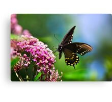 Colorful Spicebush Swallowtail Butterfly Art Canvas Print