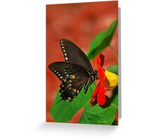 Black Swallowtail Butterfly Art Greeting Card