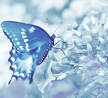 Butterfly In Blue by Laurie Minor