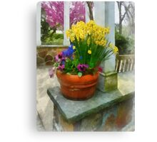 Daffodils and Pansies in Flowerpot Canvas Print