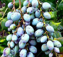 Clustered Berries by Fara