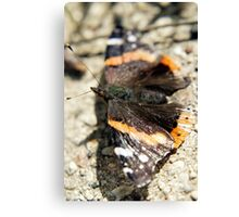 Wings Spread Canvas Print
