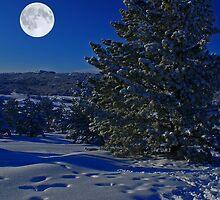 Moonlight night by alexkar08