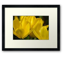 Yellow Tulip Flowers Framed Print