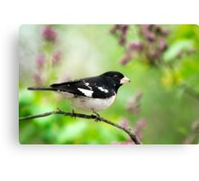 Spring Songbird Nature Art Canvas Print