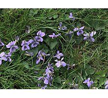 Pale Purple Photographic Print