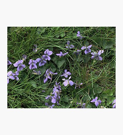 Pale Purple Photographic Print