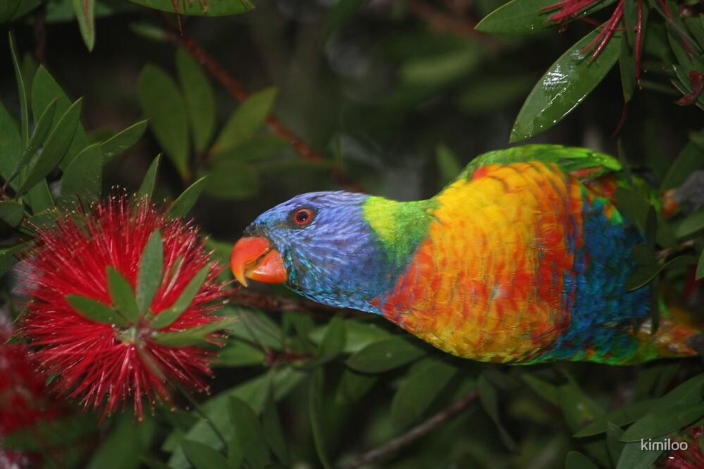 grass parrot in bottle brush by kimiloo