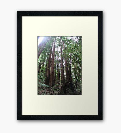 Muir Wooden Soldiers Framed Print