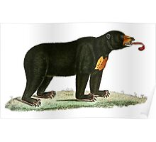 Brown Bear with long curly tongue Vintage Illustration Poster