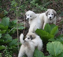 Cuties Among Skunk Cabbage by goldnzrule