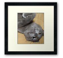 I Can See Straight Up Your Nose From Here! Framed Print