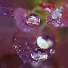 smoketree leaves with droplets by ANNABEL   S. ALENTON