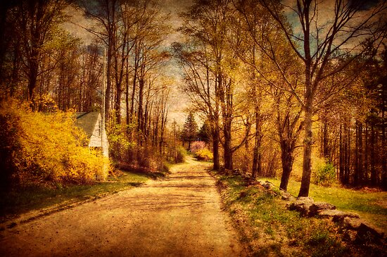 Springtime Along the Rural Road by Monica M. Scanlan
