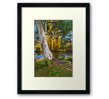 The River Gum Framed Print